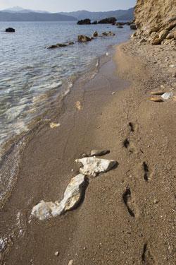 spiaggia Cala Peducelli Capoliveri Elba
