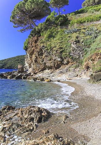 Spiagge isola d'Elba_Gennaro_Rio Marina_pino sulla scogliera in verticale