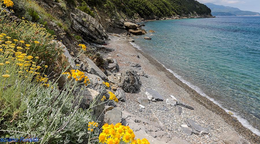 spiagge isola d'Elba - Viticcio