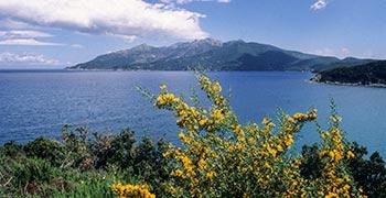 isola d'Elba macchia mediterranea ginestra spinosa presso Enfola
