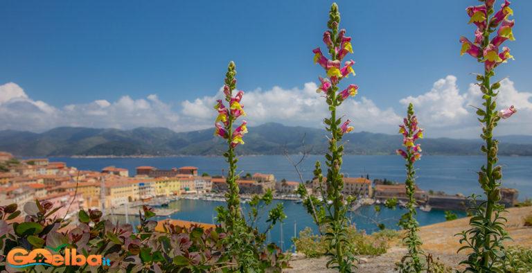 Foto: Un giardino botanico involontario all'isola d'Elba