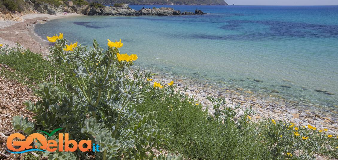 elba isola appartamenti spiaggia di Laconella