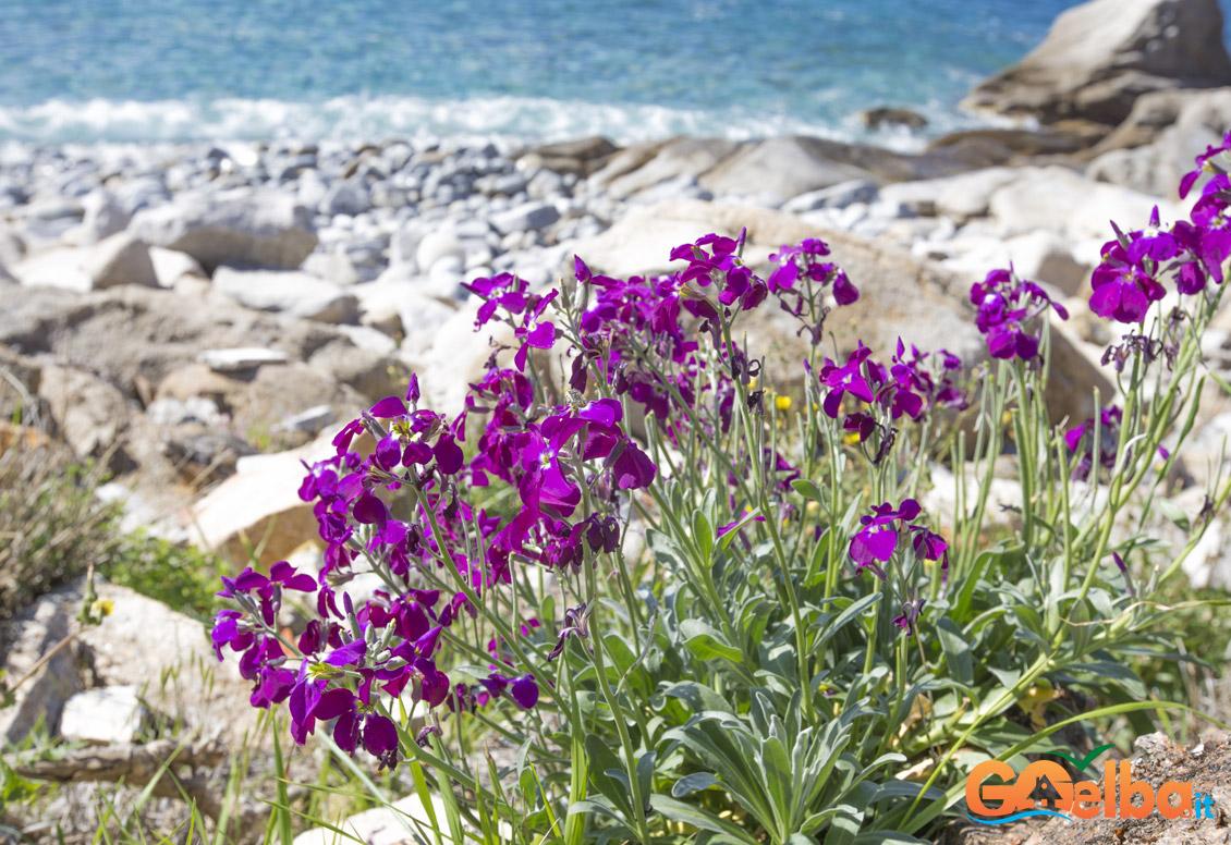 spiaggia di Seccheto isola elba