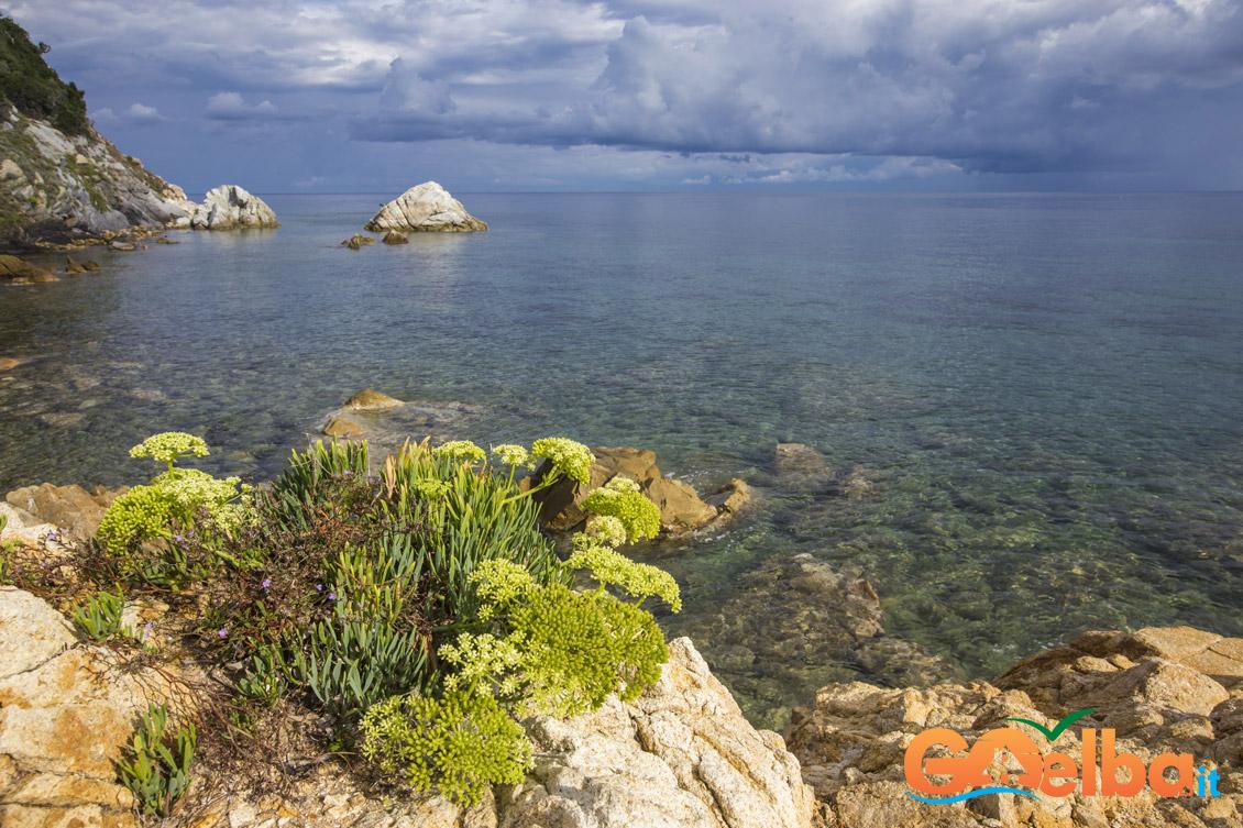 scogliera isola d'elba