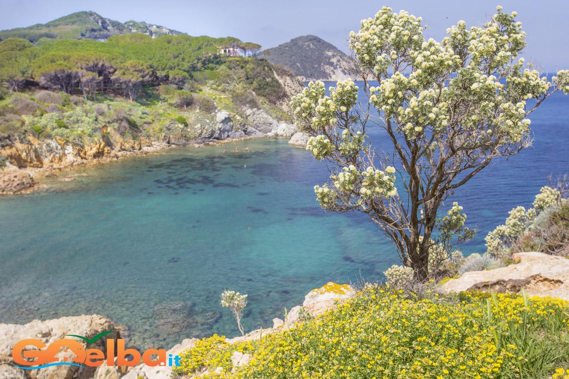 isola d'elba spiaggia di acquaviva
