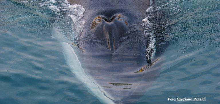 Foto: Il mio incontro con la balena all'isola d'Elba